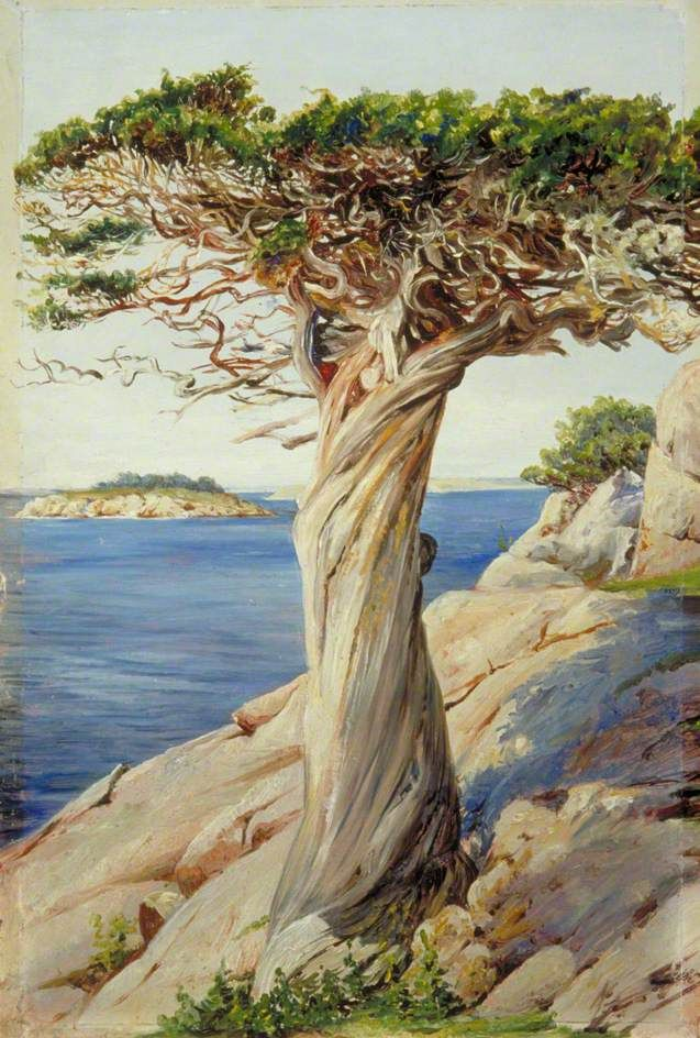 An Old Red Cedar on the Rocks near West Manchester Massachusetts 1871 - Marianne North