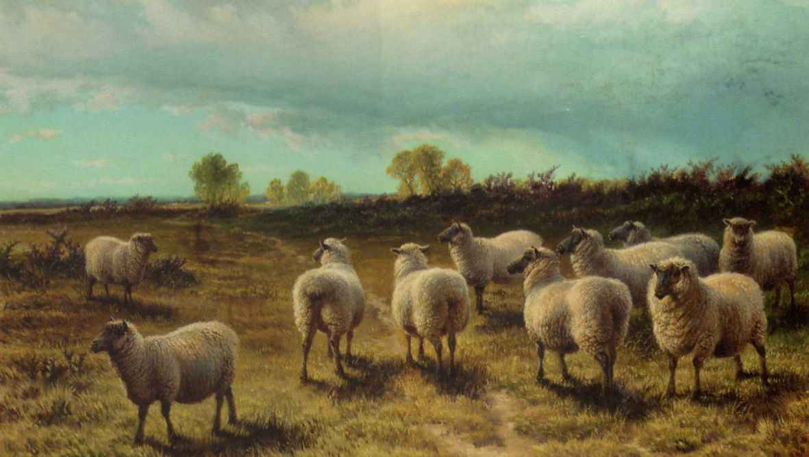Charles Jones - Sheep on a Heath